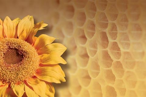hunajavaha